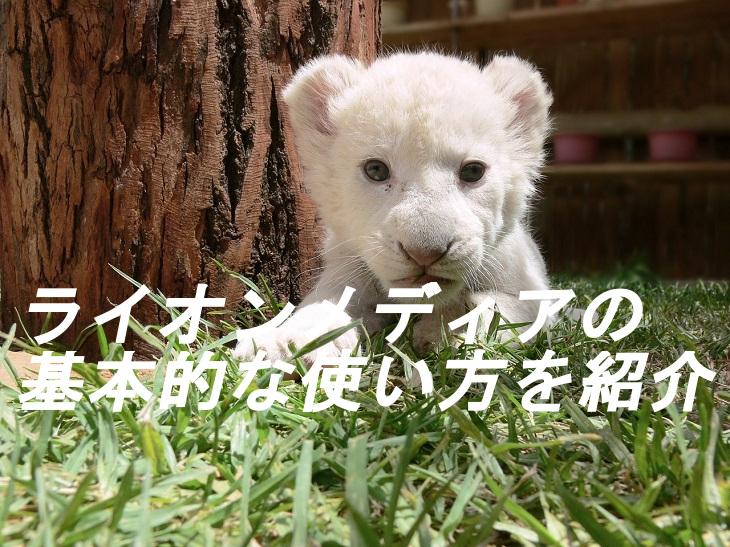 ホワイトライオン画像