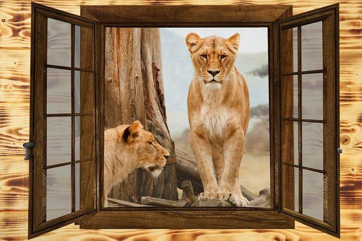 ライオン2匹、窓付き